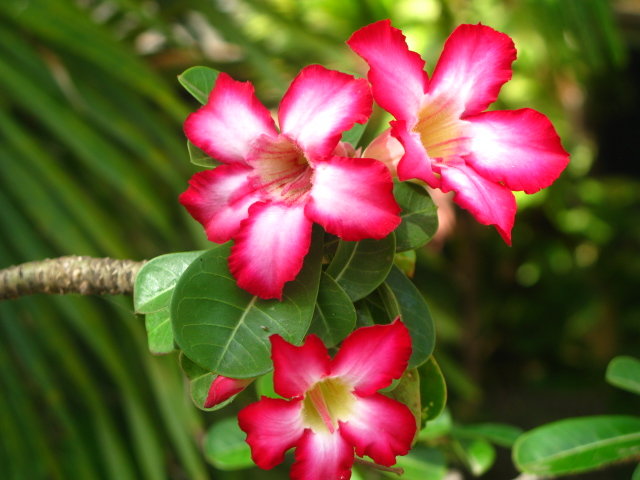 Photo Gallery: Caribbean Flowers To Brighten Your Day